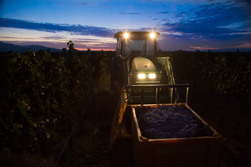 tractor night grapes